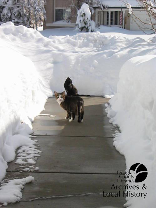 Image shows two cats exploring a sidewalk cleared of snow. The snow banks on either side are 2 or 3 feet high. One cat looks back with an expression of horror.