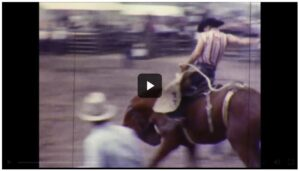 A cowboy on a bucking horse leaves the gate to perform at the Douglas County Fair and Rodeo.